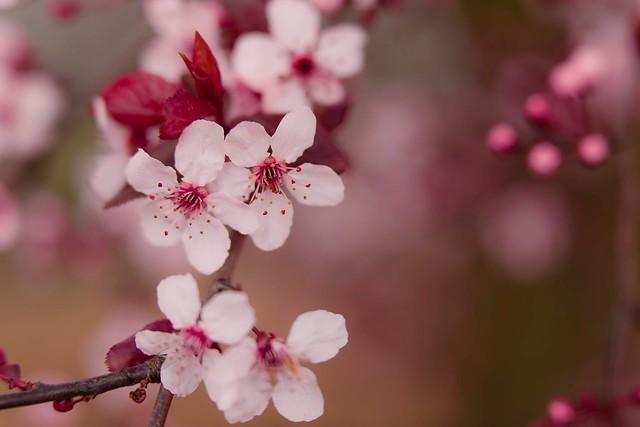 bloom-blossom-branch-432360